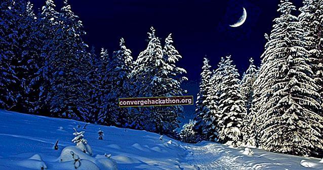 Stannar vid Woods på en snöig kväll